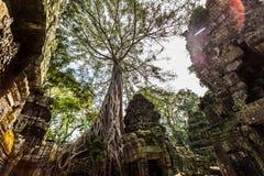 O templo de Ta Prohm em Cambodia Fotos de Stock