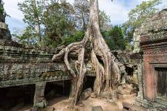 O templo de Ta Prohm em Cambodia Fotos de Stock Royalty Free
