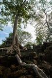 O templo de Ta Prohm em Cambodia Imagens de Stock Royalty Free