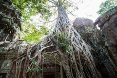 O templo de Ta Prohm em Cambodia Imagem de Stock