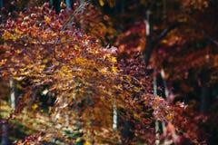 O templo e Sogenchi de Tenryu-ji jardinam com a estação do outono colorida foto de stock royalty free