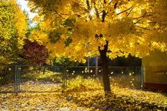 O tempo bonito do outono dá a beleza foto de stock