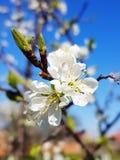 O tempo de mola… aumentou as folhas, fundo natural Foto de Stock Royalty Free