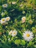 O tempo de mola… aumentou as folhas, fundo natural Fotos de Stock Royalty Free