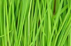 O tempo de mola… aumentou as folhas, fundo natural Foto de Stock