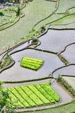 O terraço da almofada de arroz coloca Filipinas Fotografia de Stock Royalty Free