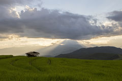 O terraço do arroz Baan-Pa-Bong-Piang dentro, Chiangmai, Tailândia Fotos de Stock