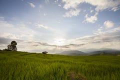 O terraço do arroz Baan-Pa-Bong-Piang dentro, Chiangmai, Tailândia Fotografia de Stock Royalty Free
