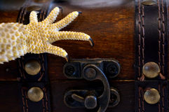 O tesouro do dragão Foto de Stock