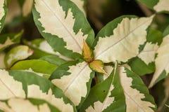 O teste padrão das folhas é verde branco, alterno fotos de stock