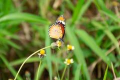 O teste padrão de borboleta, o colorido alaranjado a tempo a voar, e a ilha das flores foto de stock