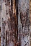 O teste padrão de uma árvore Imagem de Stock Royalty Free