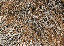 O teste padrão dos mortos secou ramos da planta na terra vocálica Imagem de Stock Royalty Free