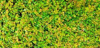 O teste padrão dos muitos verde pequeno do frescor sae do fundo da natureza fotos de stock royalty free