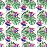 O teste padrão erval floral tropical colorido bonito brilhante bonito do verão de Havaí da violeta tropical floresce orquídeas e  Foto de Stock Royalty Free