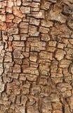 O teste padrão na madeira. Fotografia de Stock