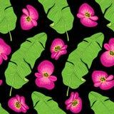 O teste padrão sem emenda botânico bonito com flores e folha tropicais como a palmeira da banana sae em fundo listrado Fotografia de Stock Royalty Free