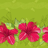 O teste padrão sem emenda com hibiscus chinês floresce no vermelho e nas listras no fundo verde ilustração stock