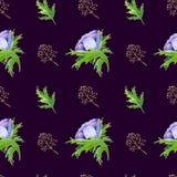 O teste padrão sem emenda com roxo branco da aquarela aumentou flores Design floral da mola para o convite do casamento foto de stock royalty free