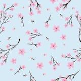 O teste padrão sem emenda da cereja cor-de-rosa floresce na luz - fundo azul ilustração do vetor