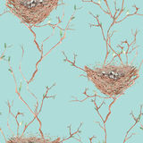 O teste padrão sem emenda do pássaro da aquarela aninha-se nos ramos de árvore, mão tirada em um fundo azul Fotografia de Stock