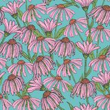 O teste padrão sem emenda floral romântico com echinacea bonito floresce, provem e sae no fundo azul Erva de florescência Foto de Stock