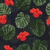 O teste padrão sem emenda tropical com monstera da palma sae e floresce Imagem de Stock Royalty Free