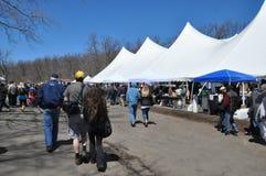 O 37th festival anual do narciso amarelo em Meriden, Connecticut imagens de stock royalty free