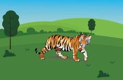 O tigre ilustração stock
