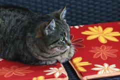O tigre pequeno encontra-se no descanso e olha-se a um pássaro Imagens de Stock