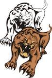 O tigress mostrado irritado ilustração stock