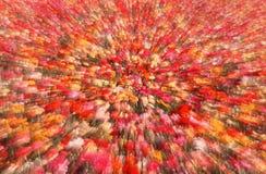 O tiro abstrato do ranúnculo floresce, San Diego, CA Foto de Stock