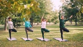O tiro da zorra do yogini bonito das mulheres que está em esteiras da ioga na pose da árvore com braços aumentou em Namaste duran vídeos de arquivo