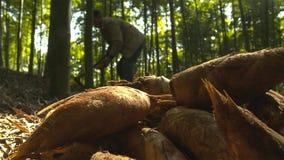 O tiro de bambu na natureza da floresta é matéria prima a cozinhar alimento delicado que cresce na montanha fotografia de stock royalty free
