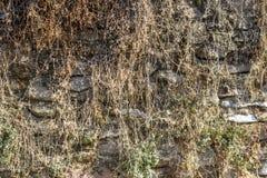 O tiro dianteiro da parede de alvenaria coberto com o amarelo coloriu plantas imagem de stock