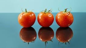 O tiro dos tomates vermelhos surge com gotas da água isolados no fundo azul lustroso fotografia de stock royalty free