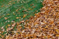 O tiro horizontal das folhas amarelas no fundo da grama verde pode ser usado para seu fundo Folha do bordo durante a luz solar na fotografia de stock royalty free