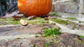O tiro macro da jaque-o-lanterna e do musgo no tijolo pisa Imagem de Stock