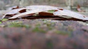 O tiro macro de uma folha no tijolo pisa Fotos de Stock