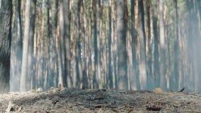 O tiro próximo como os pés do ` s do soldado corre através da floresta filme
