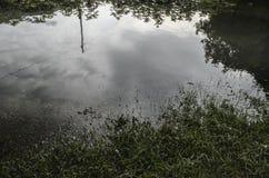 O tiro subaquático da grama e das plantas submergiu na água clara com lotes dos airbubbles e da reflexão na subsuperfície Foto de Stock