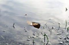 O tiro subaquático da grama e das plantas submergiu na água clara com lotes dos airbubbles e da reflexão na subsuperfície Imagem de Stock Royalty Free
