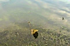 O tiro subaquático da grama e das plantas submergiu na água clara com lotes dos airbubbles e da reflexão na subsuperfície Imagens de Stock