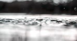 O tiro subaquático da grama e das plantas submergiu na água clara com lotes dos airbubbles e da reflexão na subsuperfície Fotografia de Stock