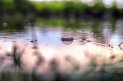 O tiro subaquático da grama e das plantas submergiu na água clara com lotes dos airbubbles e da reflexão na subsuperfície Fotos de Stock