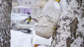 O titmouse dos pássaros come dos alimentadores no inverno na queda de neve video estoque