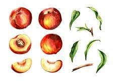 O todo e o pêssego cortado frutificam e as folhas ajustadas Ilustração tirada mão da aquarela, isolada no fundo branco imagem de stock