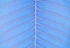 O tom de superfície da arte do close up do teste padrão abstrato na folha fresca azul textured o fundo no tom da arte imagem de stock