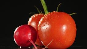 O tomate fresco gerencie em um fundo preto com gotas da água Foto de Stock