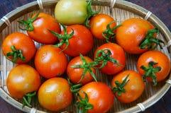O tomate, impede o câncer da mama fotos de stock royalty free